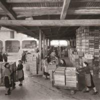Donne al lavoro nella cernita e nel confezionamento delle mele presso il magazzino ortofrutticolo Garagnani. Foto senza data, risalente al secondo dopoguerra