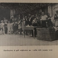 Distribuzione di galli miglioratori per i pollai delle massaie rurali, foto in Agenda della massaia rurale, Roma, 1936.