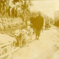 Cani che trasportano viveri in trincea, Museo Civico del Risorgimento di Bologna