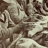 Addetti alla stagionatura dell'azienda Melchiorre Ferrari, Collecchio, 1950 ca. - Museo del Prosciutto - Langhirano