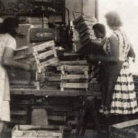Il commercio della frutta genera un indotto considerevole. Nei primi decenni del secondo dopoguerra il reparto imballaggi della Cooplegno fornisce imballaggi ai magazzini, garantendo periodi di lavoro ai propri soci