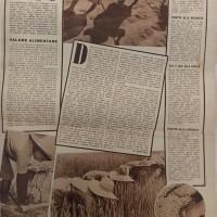 Riso. Valore alimentare, in «Annabella», n. 6, agosto 1940.