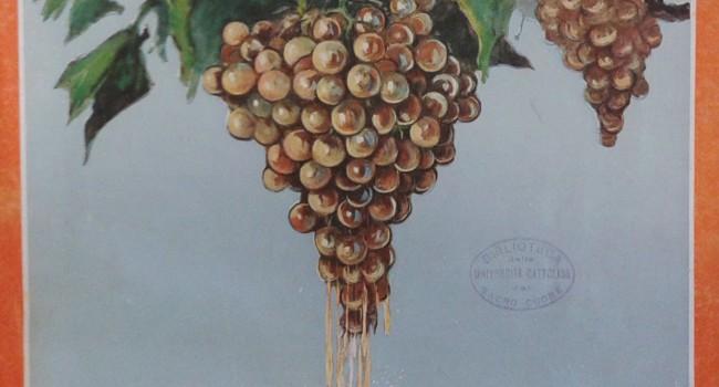"""Il vino come risorsa per l'economia. La rivista """"Enotria"""" negli anni Venti"""