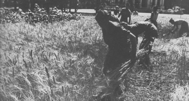 «Nemmeno una zolla rimanga incolta»: gli orti di guerra