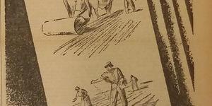 Vincere. Bieticoltori! Anche nelle prime fasi del lavoro, usate tutte le cure possibili e i sistemi più razionali per raggiungere la meta dei 50 q.li di saccarosio per ettaro. Il paese attende da voi il suo fabbisogno di zucchero e alcole carburante per la nostra vittoria, in «Il Resto del Carlino», 28 novembre 1942.