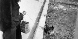 Gallina al guinzaglio a Porta Saragozza, foto in Archivio Anpi, Bologna.