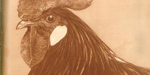 """Il numero del 16 novembre del 1926 della """"Italia agricola"""" dedica la copertina al tema dell'avicoltura."""
