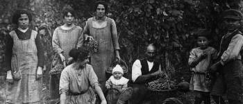 Fra le guerre mondiali la vendemmia è un momento importante per le comunità rurali del Panaro e del Samoggia: il vino integra la dieta dei contadini con calorie necessarie ad affrontare il lavoro nei campi.