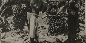 Banane somale. Le belle banane somale sono da tempo ben note ai consumatori nel regno. Mature, aromatiche, zuccherine sono alimento nutriente e assai appetito non solo dai bambini ma anche dagli adulti che ne fanno largo consumo, foto in «L'Illustrazione italiana», n. 44, novembre 1939.