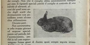 Aumentiamo l'allevamento dei conigli, in Agenda della massaia rurale, Roma, 1936.
