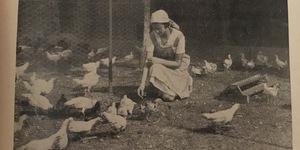 Cura del pollaio, foto in Fasci femminili di Genova, Sezione Massaie rurali, La massaia rurale genovese in regime sanzionista, Genova, 1935.