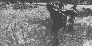 La mietitura del grano ai giardini Margherita, foto in Franco Cristofori, Bologna. Gente e vita dal 1914 al 1945, Bologna, Alfa, 1980, p. 463.