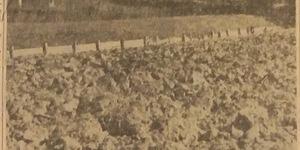 Semina del grano ai giardini, in «Il Resto del Carlino», 25 settembre 1941.