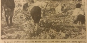 Le giovani studentesse del nostro ateneo danno la loro opera nei lavori agricoli, in «Il Resto del Carlino», 17 settembre 1942.